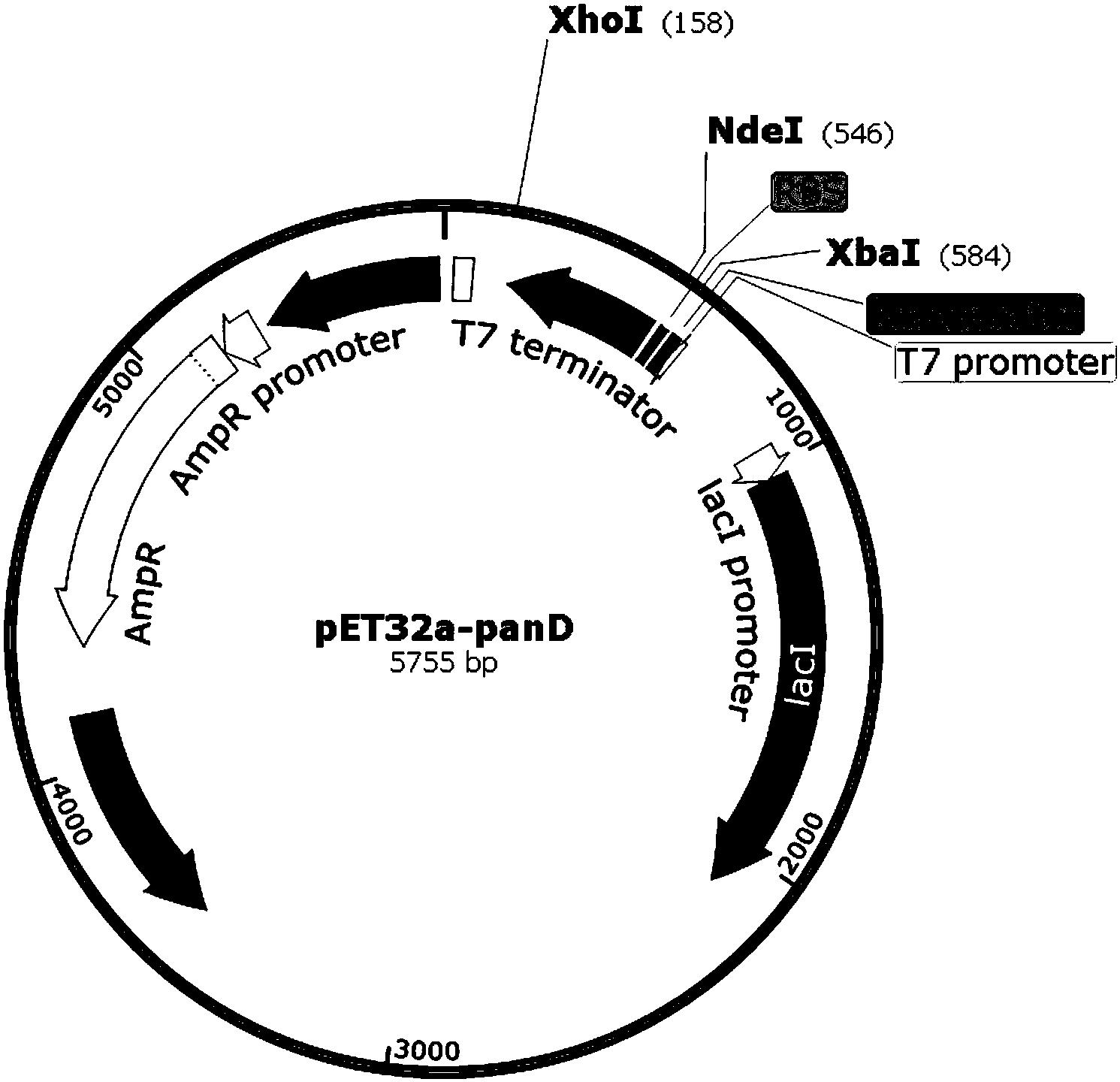 cn108841883a_一种生物酶法转化生产β-丙氨酸和d-天冬氨酸的方法在审