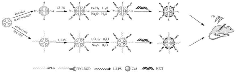 一种两性离子修饰树状大分子包裹硫化铜纳米颗粒/pDNA复合物的制备方法