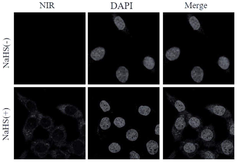 一种H<sub>2</sub>S近红外荧光分子探针及其制备方法与应用