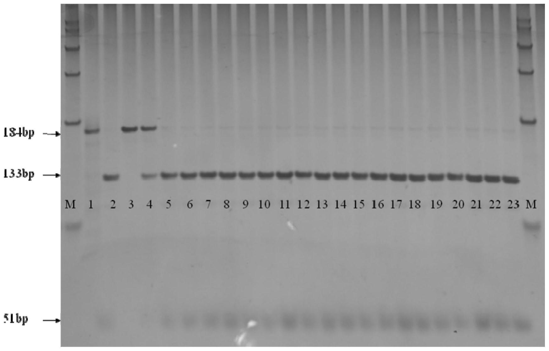 东乡野生稻OsCERK1基因的检测方法和鉴定方法